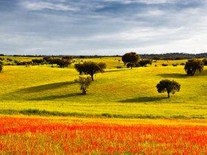 Fly-drive Hoogtepunten van Portugal
