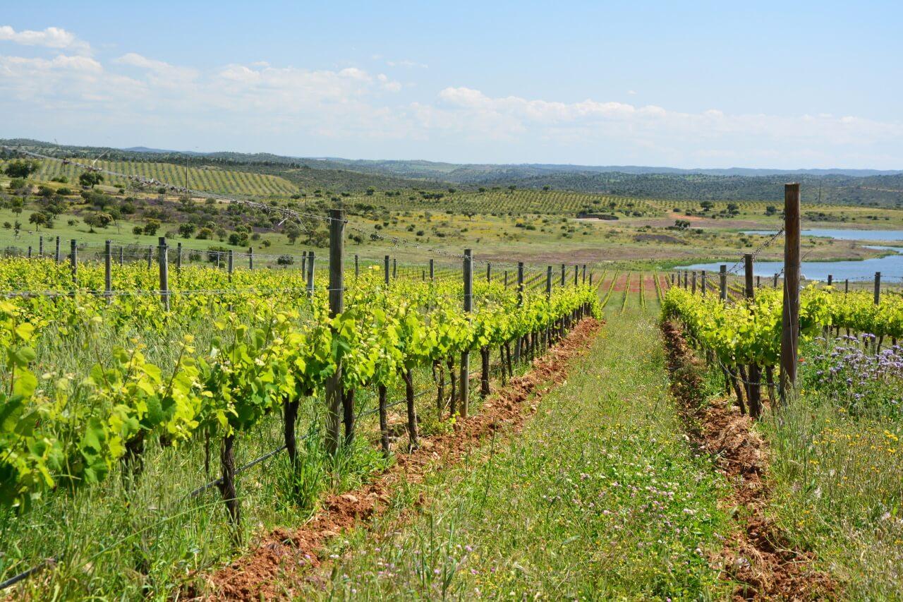Zuid Portugal Alentejo wijnvelden